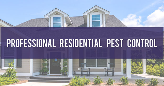 Residential Pest Control in and near Brooksville Florida