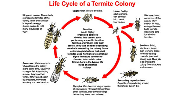 Termite Treatment Pest Control in and near Brooksville Florida