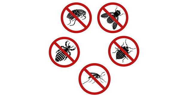 Bug Pest Control in and near Homosassa Springs Florida