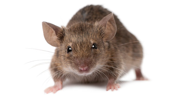 Mouse Pest Control in and near New Port Richey Florida