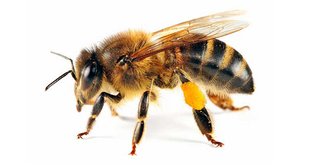 Bee Pest Control in and near Palm Harbor Florida