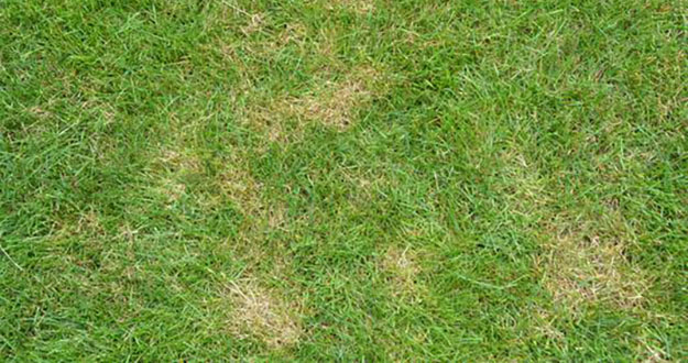 Lawn Fungus Control in and near Palm Harbor Florida