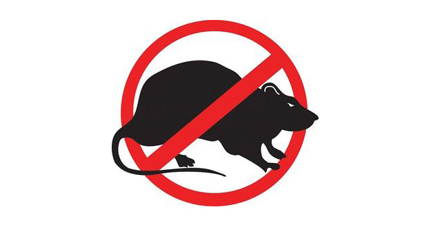 Rat Pest Control in and near Palm Harbor Florida