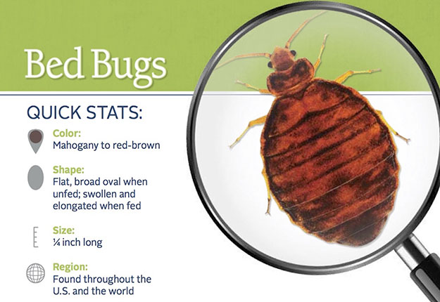 Bed Bug Pest Control in and near Tampa Florida