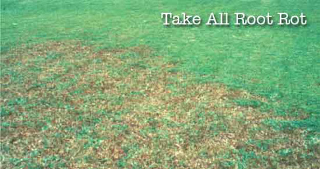 Take all Root Rot Control in and near Tampa Florida
