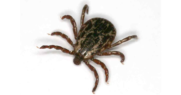 Tick Pest Control in and near Tampa Florida