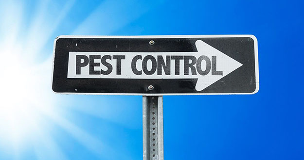 Business Pest Control in and near Tarpon Springs Florida