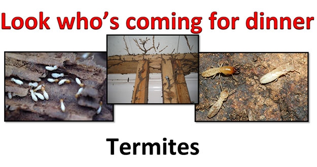 Termite Control in and near Zephyr Hills Florida